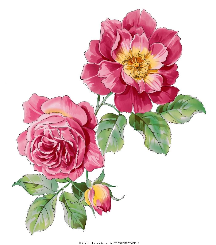 手绘月季花朵元素