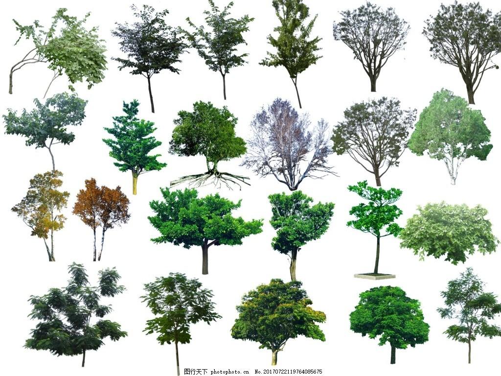 手绘植物大树元素