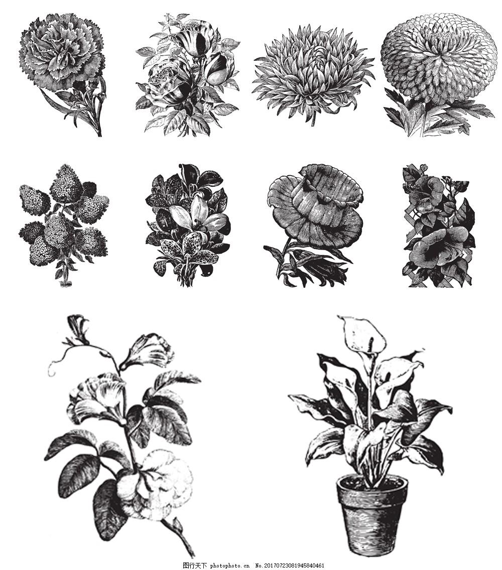黑白手绘花卉插画 菊花 百合 鲜花 素描