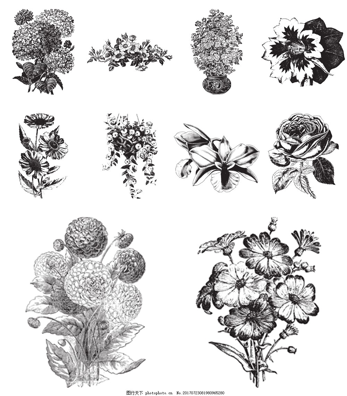 手绘黑白植物插画 花朵 手绘 素描 黑白 植物 插画 玫瑰 菊花