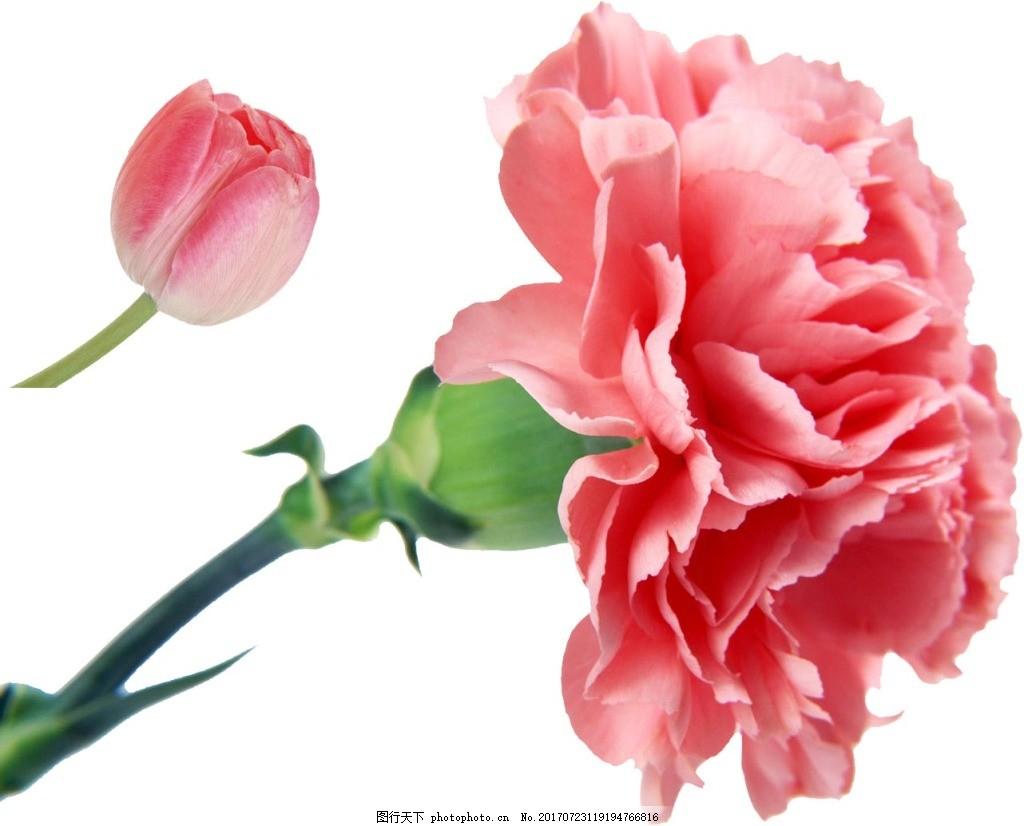 小清新花朵元素 粉色花朵 树枝 花枝 月季 花苞 免抠