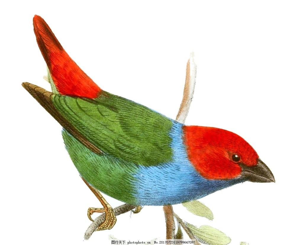 手绘彩色小鸟元素 手绘 红色鸟头 彩色小鸟 动物 树枝 png 免抠 素材