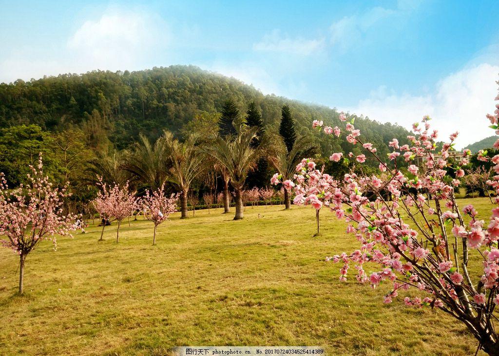 春天風景 春天景色 藍天 白云 桃花盛開 草地 桃樹 樹林 桃林 風景