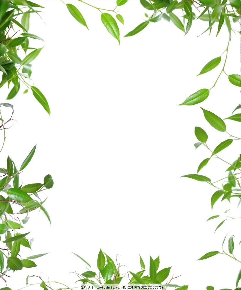 绿叶白底边框 绿叶 白底 边框 绿色 白色 设计 自然风景 设计 底纹