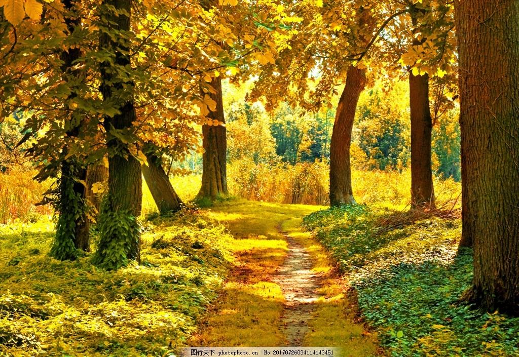 秋日阳光 金秋 秋日美景 秋季 风景 唯美 秋天 秋季风景 树叶