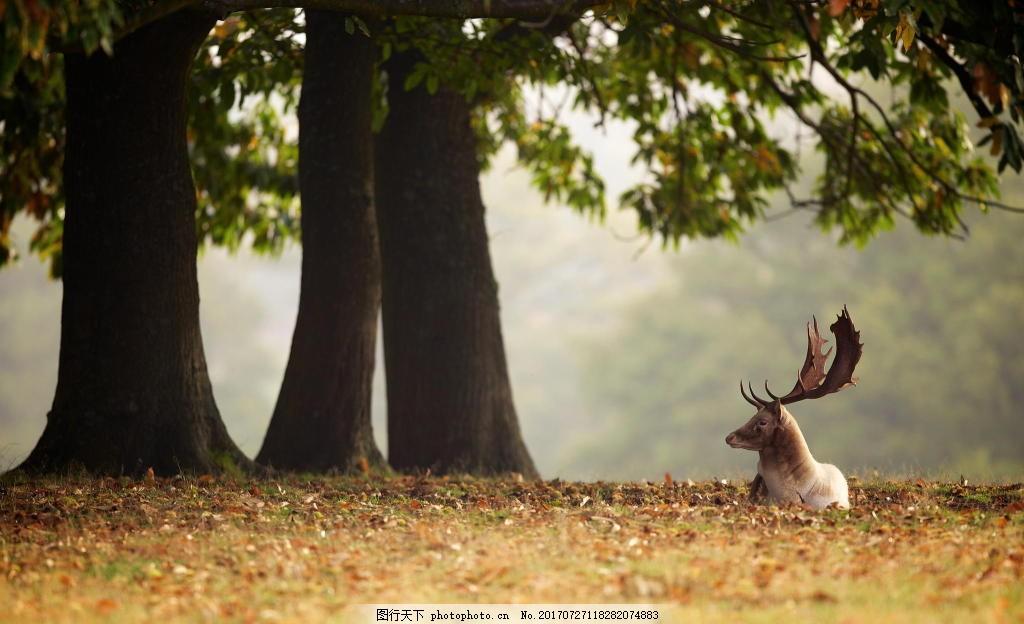 梦幻森林麋鹿动物背景