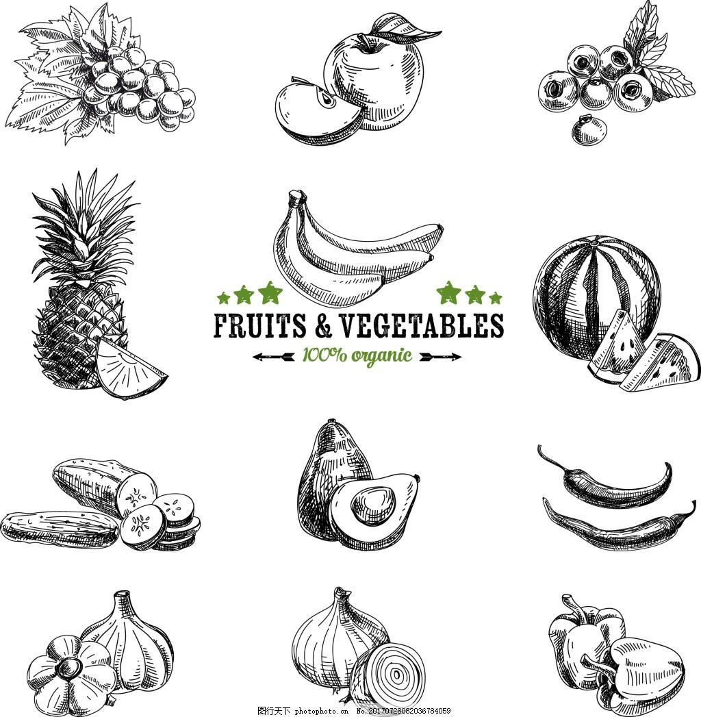 手绘水果和蔬菜插画图片