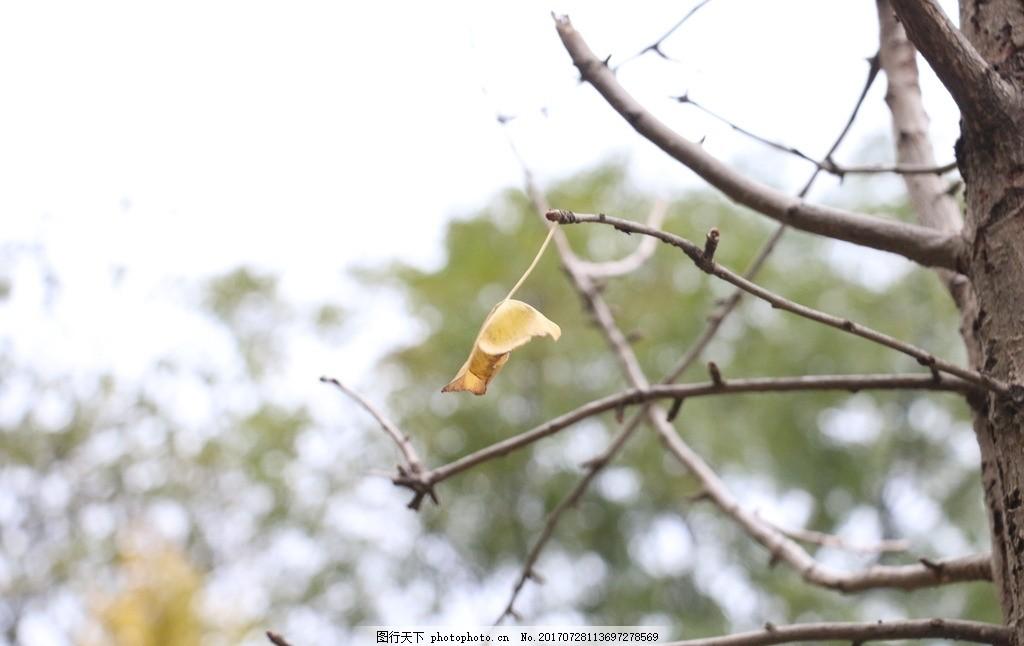 叶子 银杏 黄色 秋天 落叶 摄影 建筑园林 园林建筑