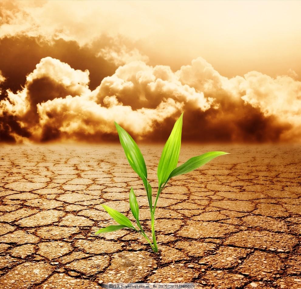 干旱绿叶 龟裂 云 大地 绿色 黄色 土地 裂纹 自然风景 摄影