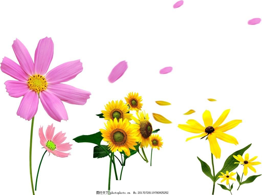 手绘彩色花朵元素 手绘 向日葵 小雏菊 花瓣纷飞 png 免抠 素材 png