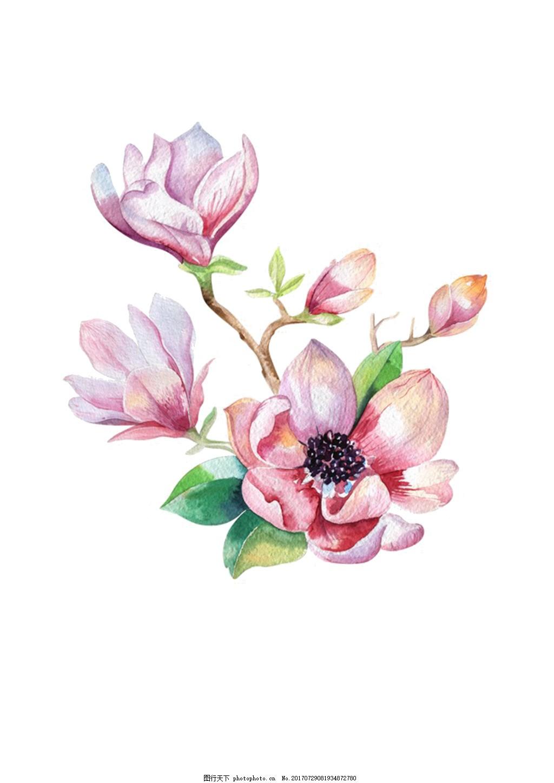 手绘花psd分层素材小清新10 水彩画 手账素材 海报素材 花朵