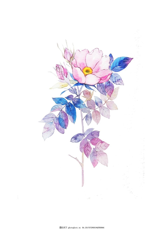 手绘花psd分层素材小清新5 水彩画 手账素材 海报素材 花朵