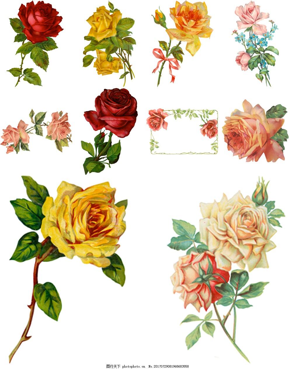 手绘复古玫瑰花 艺术 插画 红玫瑰 黄玫瑰 牡丹 植物 水彩绘