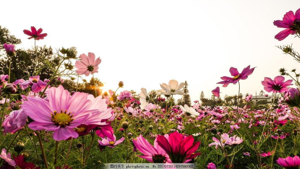 浪漫花海风景背景 旅行 花丛 绿叶 摄影 背景素材