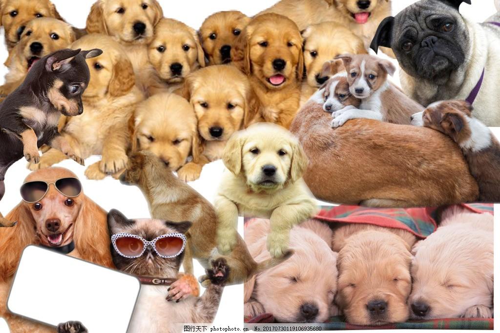 宠物狗狗小动物分层图片大全psd素材 动物图片 分层素材 狗狗图片