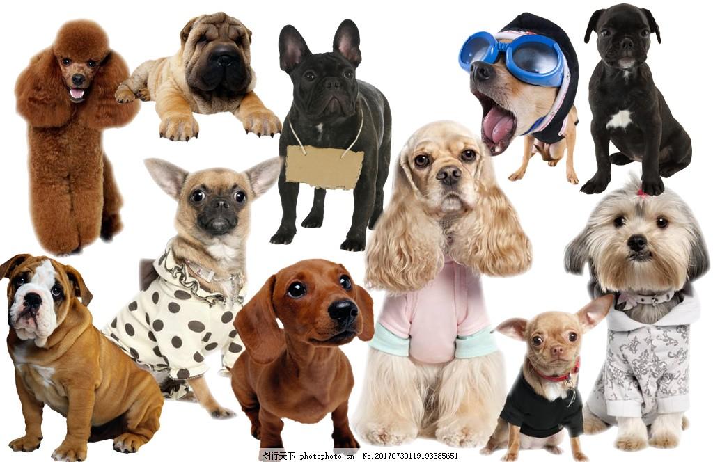 宠物狗狗动物分层图片大全psd素材