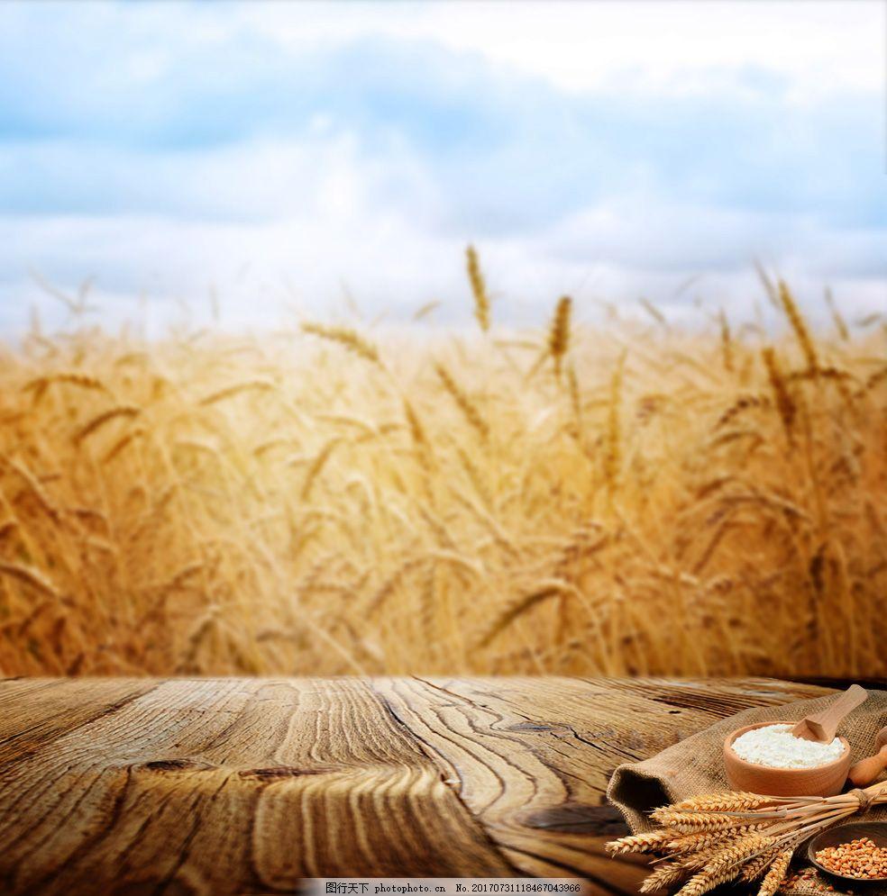 啤酒背景直通车素材 主图背景 背景素材 背景模版 小麦 面粉 水稻