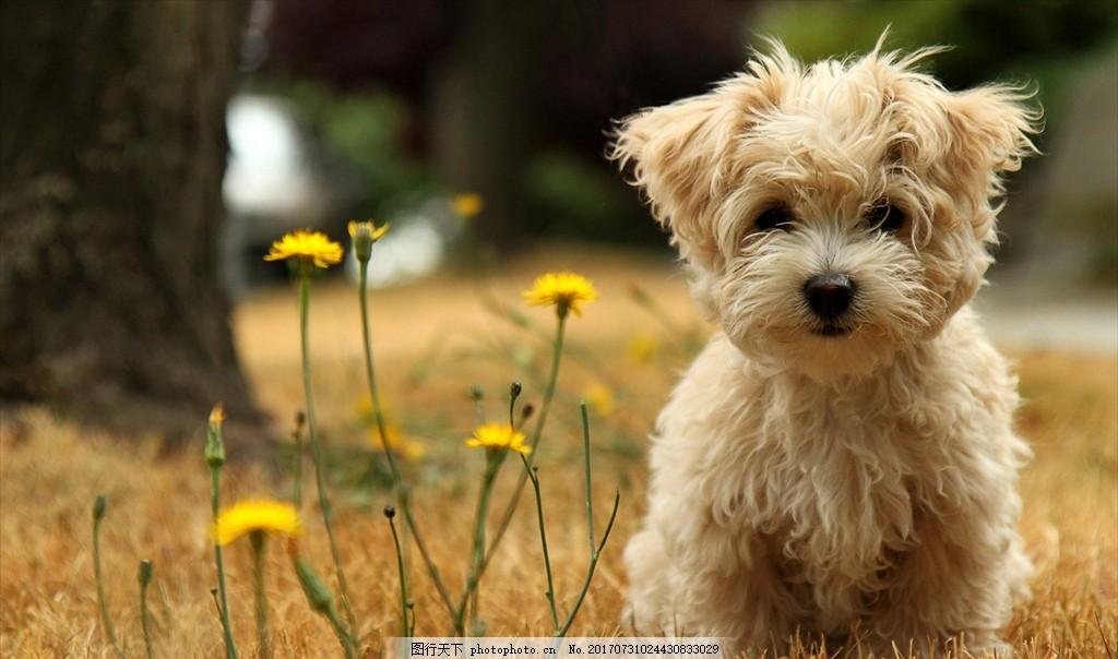 狗 小狗 可爱动物 可爱小狗 小白狗 狗狗 摄影 生物世界 野生动物 96d