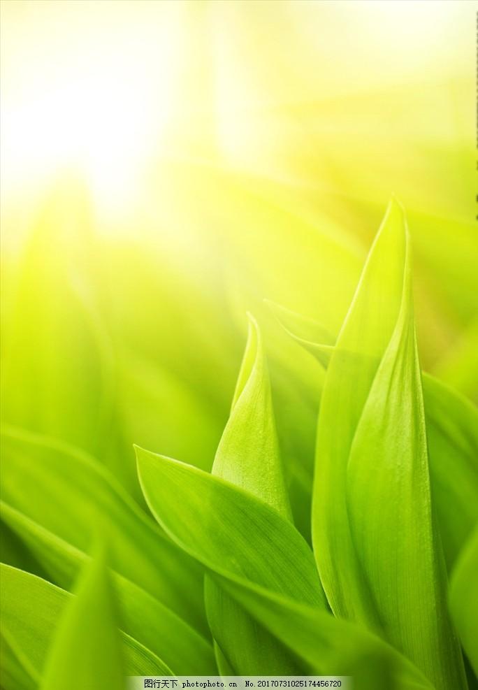绿叶 近景 微焦 微距 背景 阳光 绿色 自然风景 设计 生物世界 花草