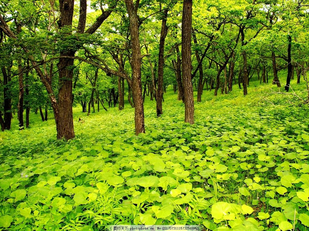 绿色森林 绿色 森林 树木 草地 植被 大树 自然风景 摄影 自然景观