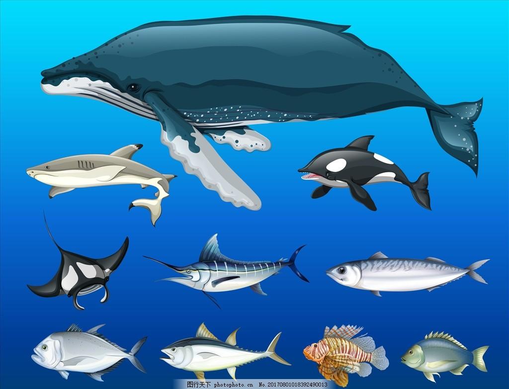 深海 海底光线 深海水纹 海底世界 美丽海底 海底奇观 海下光线 鲸鱼