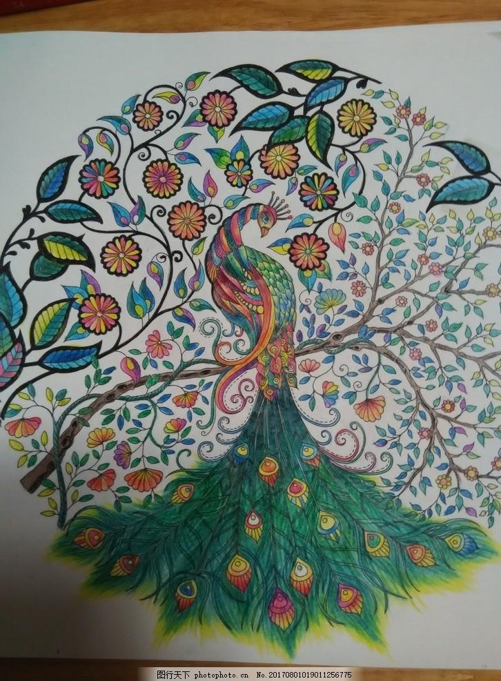 孔雀 手绘 彩色铅笔画 减压 韩国 秘密花园 摄影 美术绘画