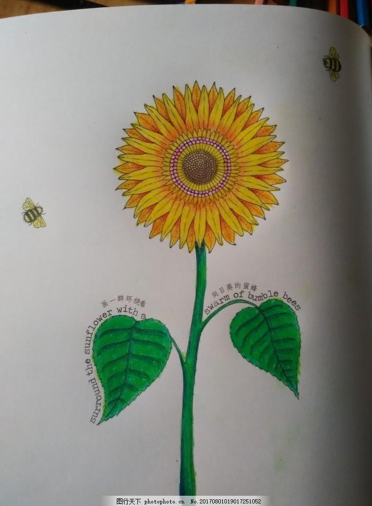 手绘 橘黄色 画 彩色铅笔画 彩铅画 秘密花园 摄影 文化艺术 美术绘画