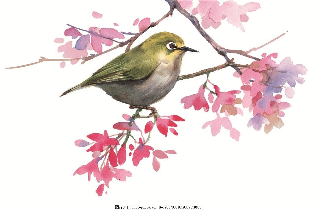 水彩画 鸟 小清新 花虫画 虫鸟花 虫鸟画 花鸟画 画鸟 画小动物 鱼类
