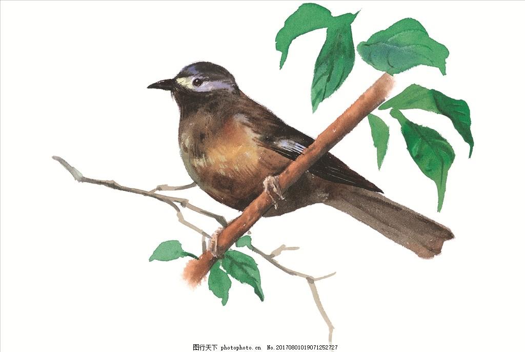 水墨画鸟 水彩画 小清新 花虫画 虫鸟花 虫鸟画 花鸟画 画小动物