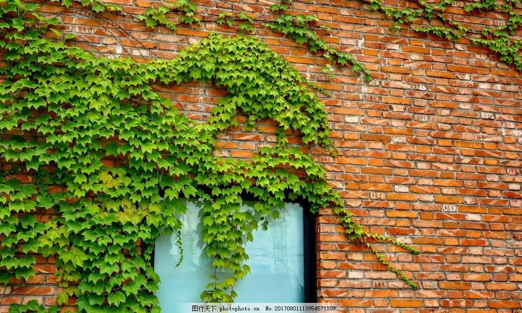 植物外墙 爬山虎 欧式红砖房 藤蔓 绿色外墙 绿色植物 绿色背景