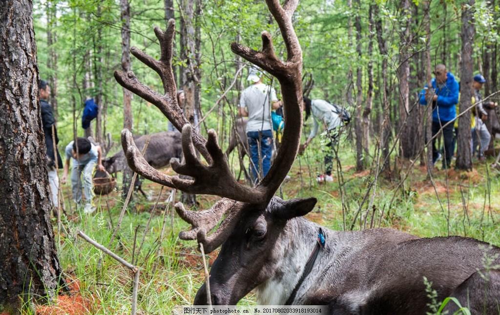 四不像 内蒙古 呼伦贝尔 生态园林 动物 呼伦贝尔大草原 摄影