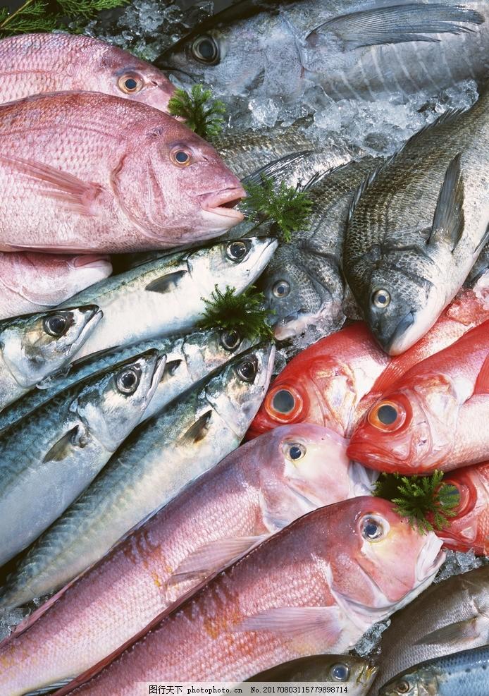 头对头的一堆海鱼 新鲜鱼 鱼类 摄影 餐饮美食 其他