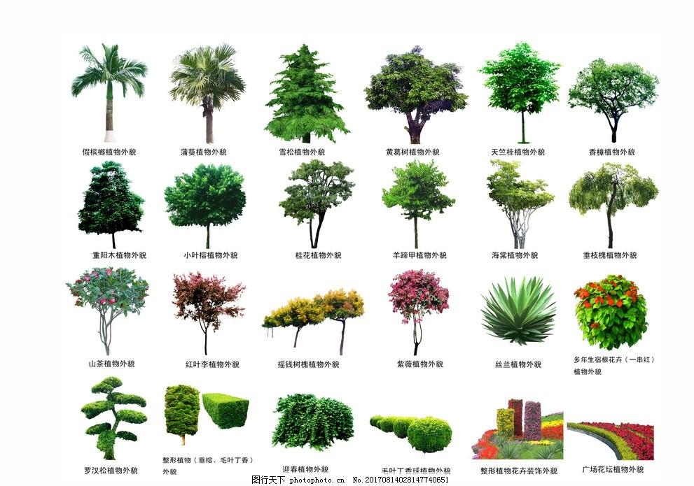 平面树 效果图 树种 平面图 景观园林素材 源文件