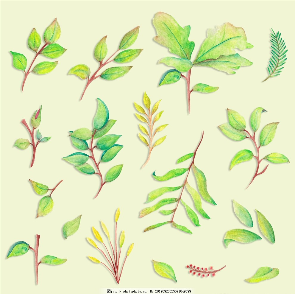 水彩手绘树叶枝叶